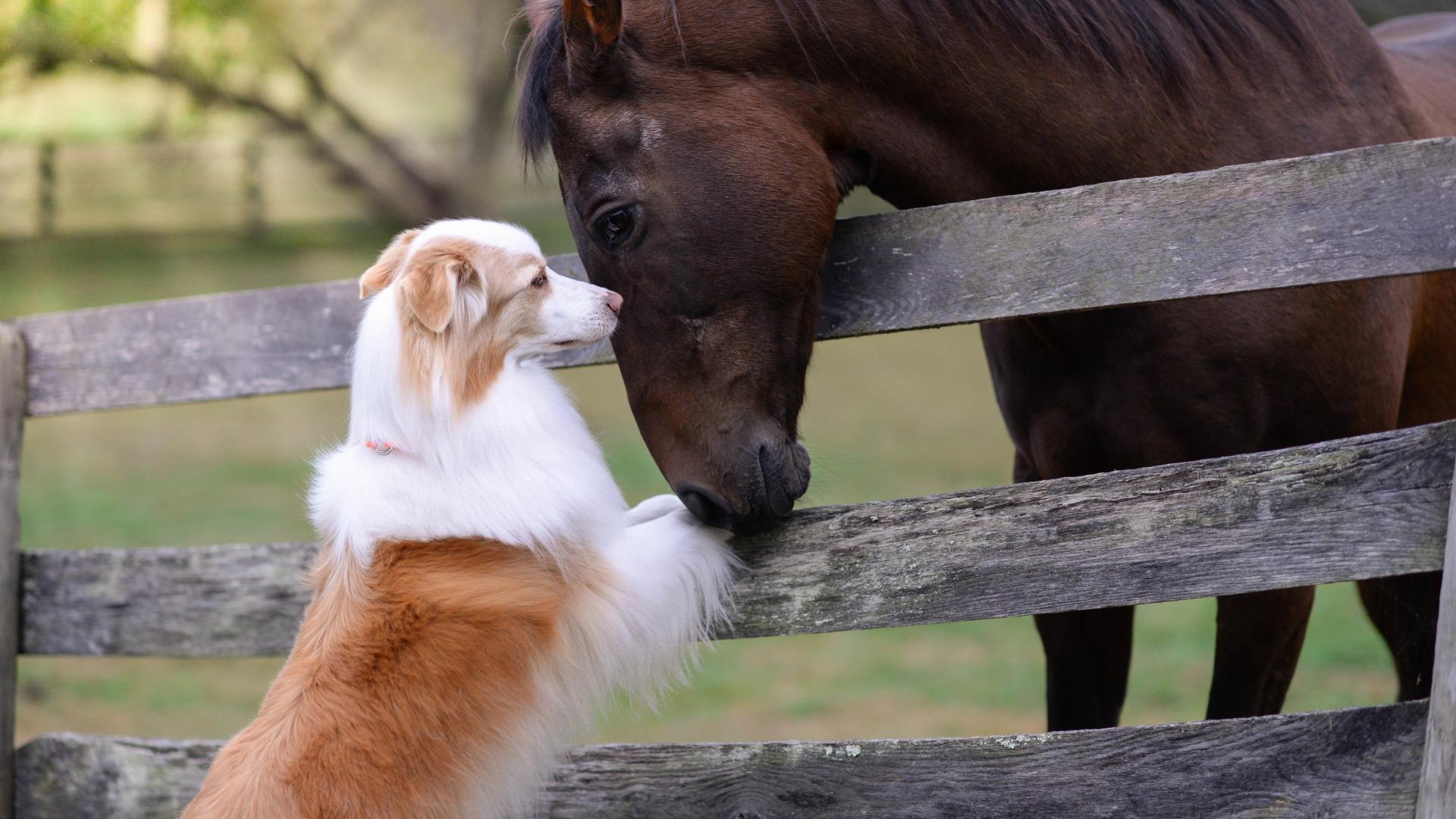 Wist jij dat paarden en honden elkaar begrijpen?