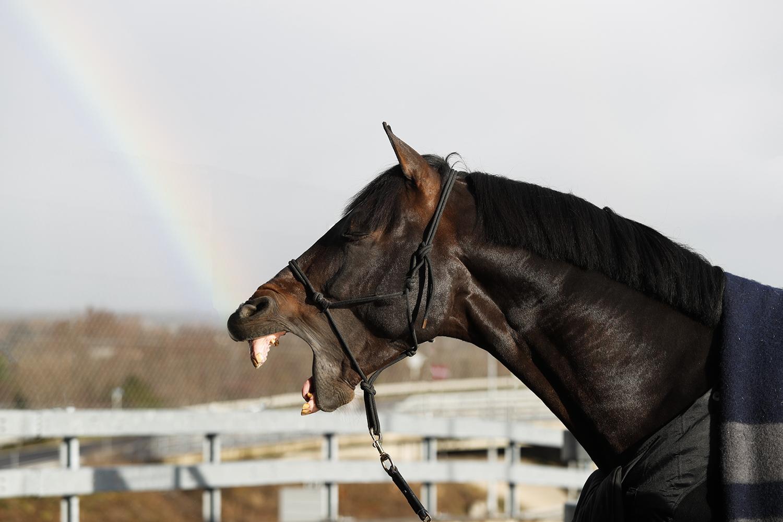 Welkom op Horsetags, de nieuwe digitale hotspot voor #horselovers!