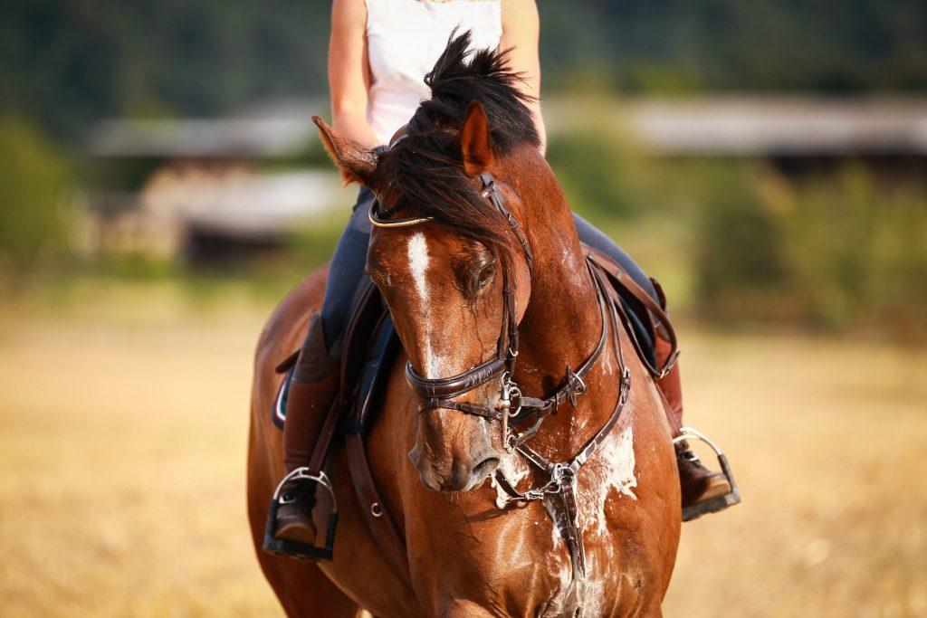 Zwetend paard zware inspanningen extra voeder