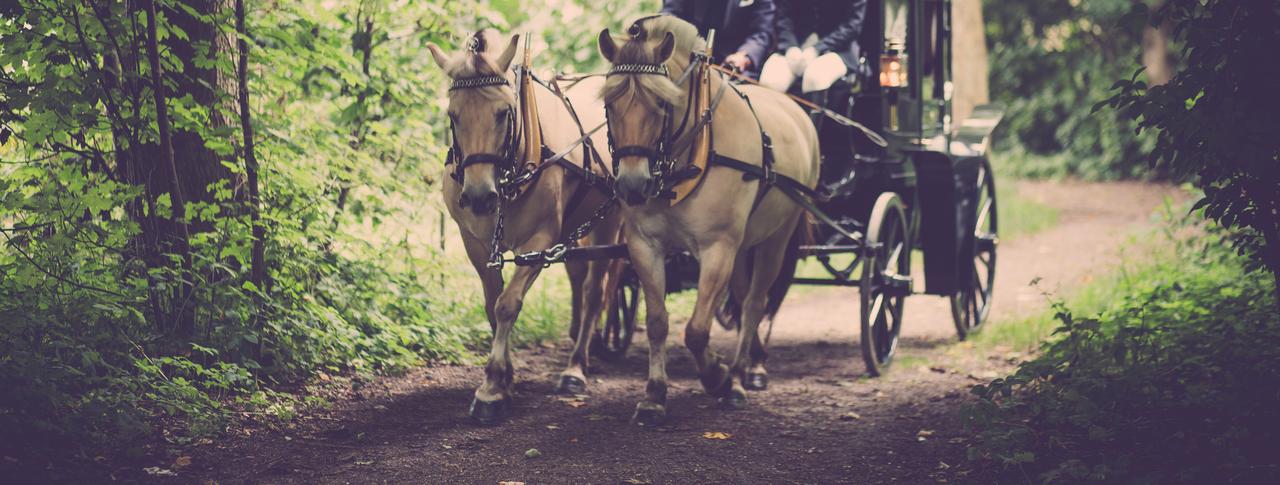 Je pony opleiden voor de koets… een makkie?