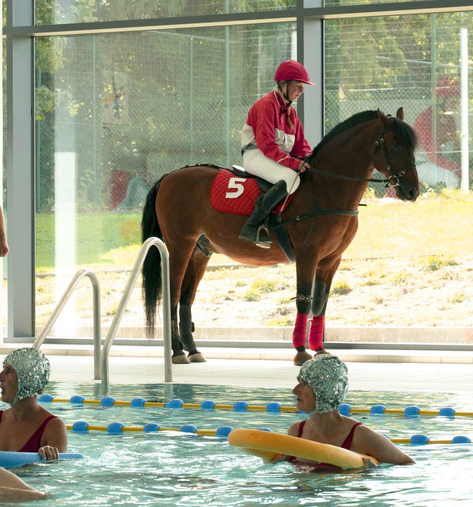 Thalya - fuego - iedereen beroemd - generiek - stuntpaard