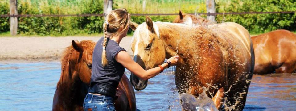 Watergewenning paard