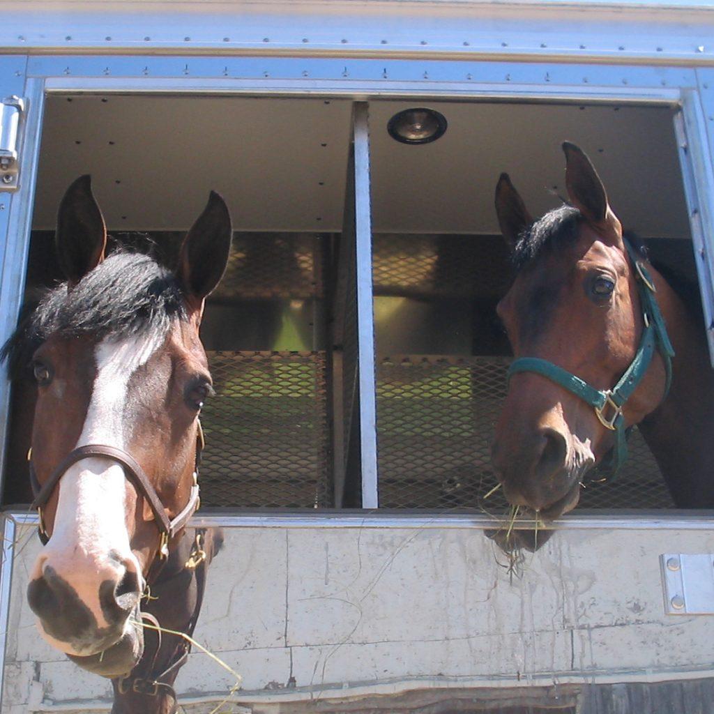 paarden vervoeren warm weer