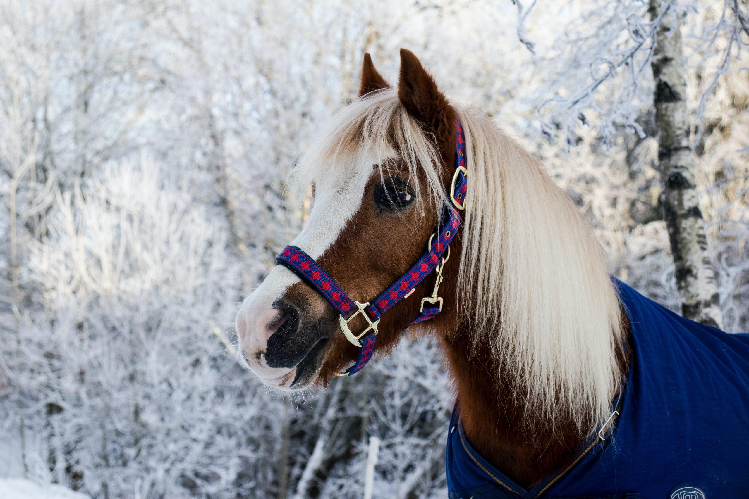 Je paard gezond houden tijdens de winter