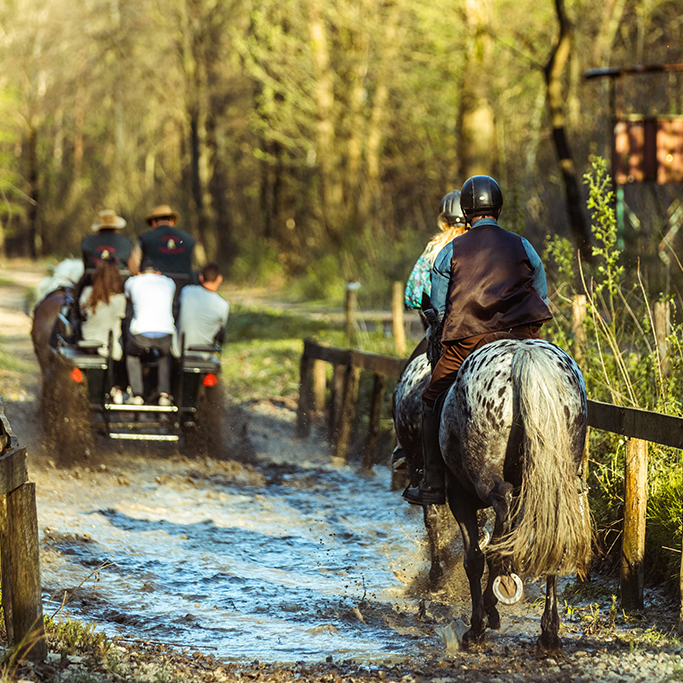Limburgs ruiterroutenetwerk