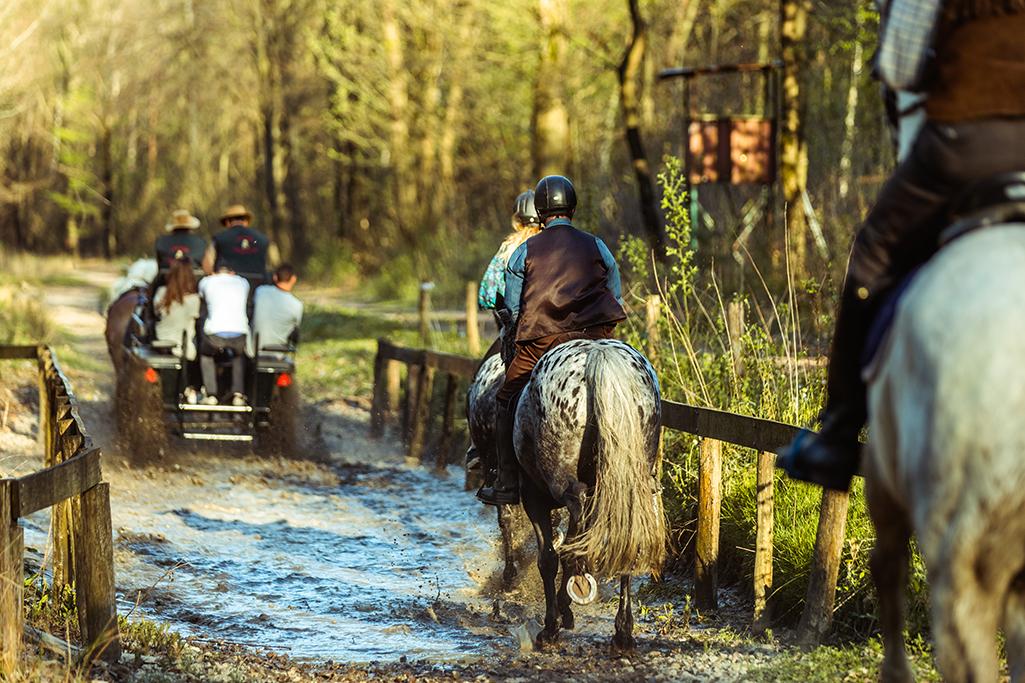 Bouw mee aan het Limburgs ruiterroutenetwerk