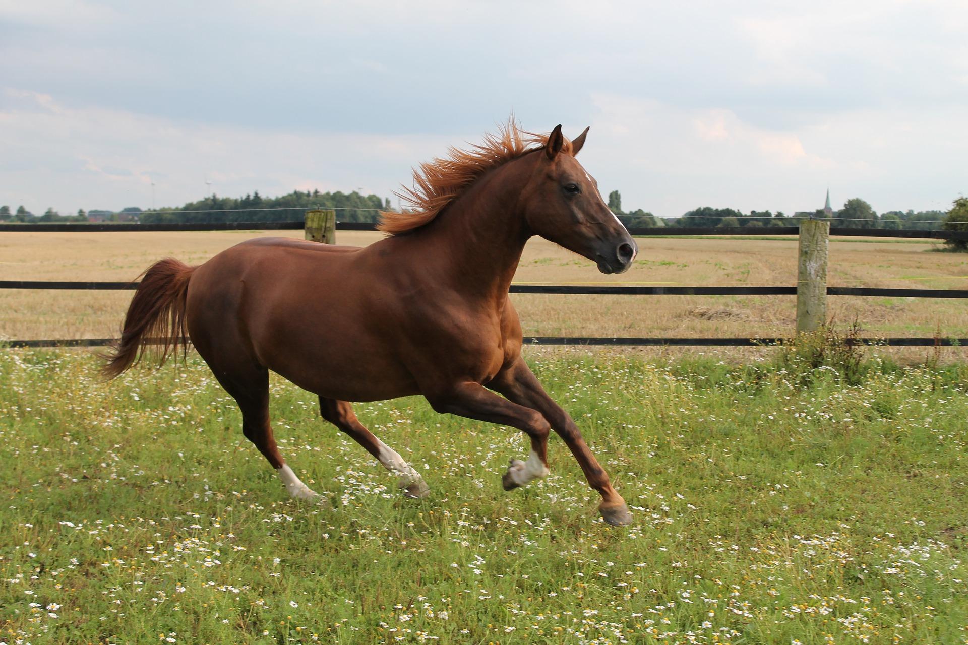 Vijf basics voor jouw paardenweide