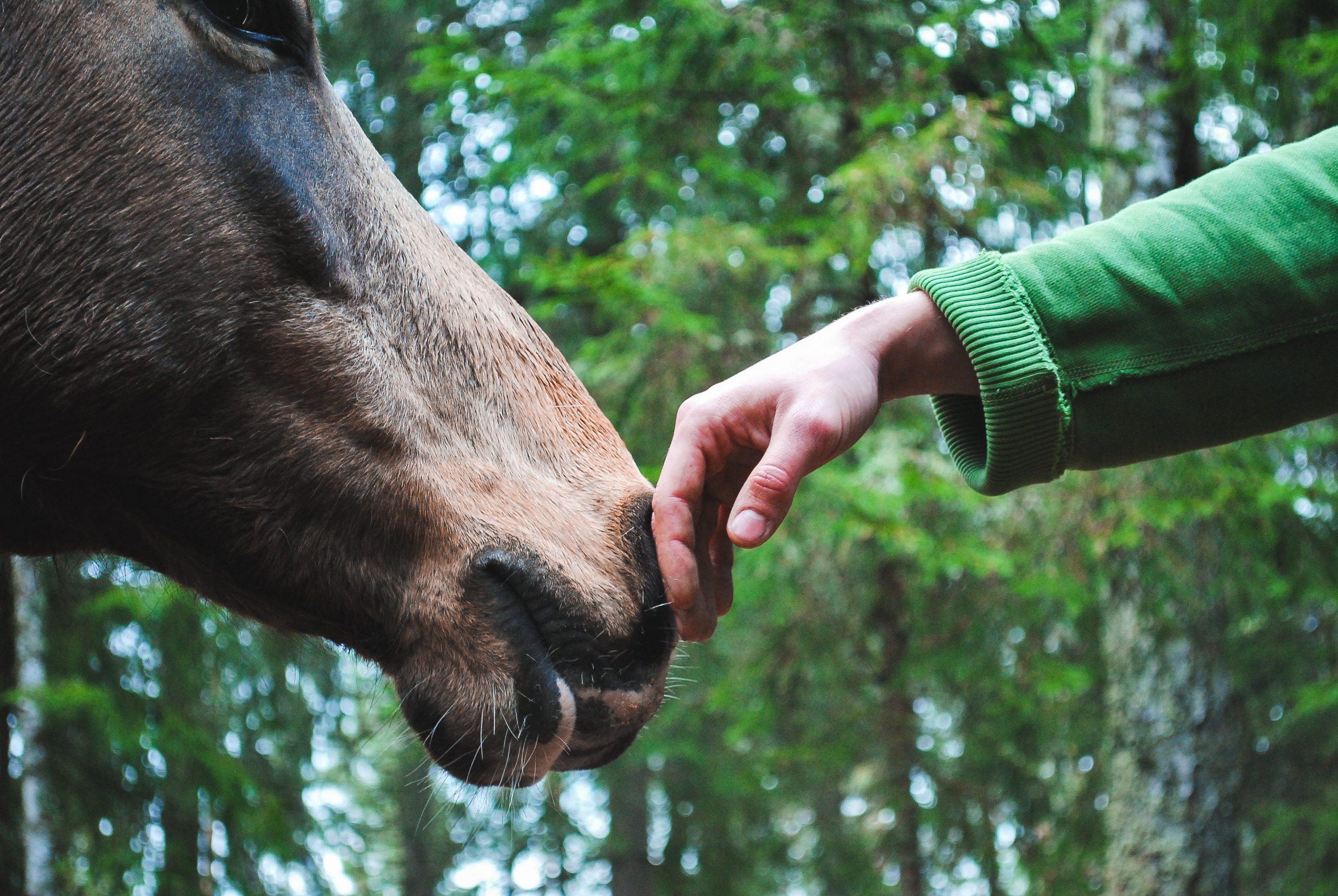 Kinderen leren over paardenwelzijn in de klas