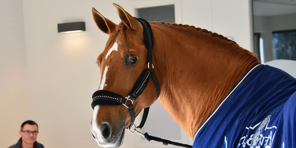 Een uniek paard: dokter Peyo