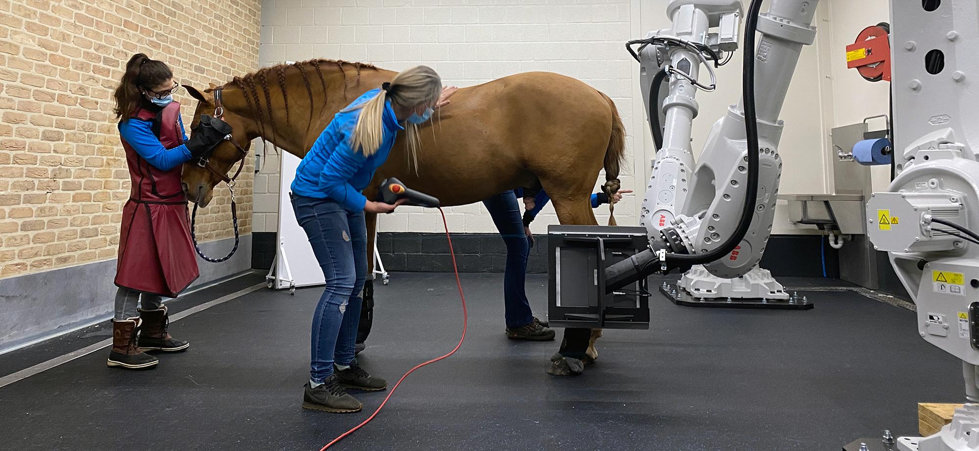 EDAMIS, Europa's eerste robot-CT-scanner voor paarden!